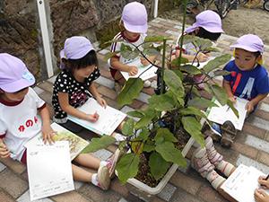 松青保育園は食育の一環として野菜作りに取り組んでいます