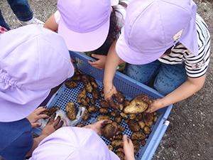 自分で育てた野菜で食育を体験 鹿児島市松青保育園
